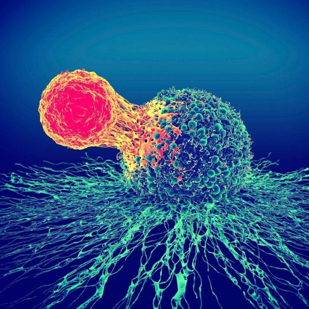 cómo funciona el Sistema inmunológico